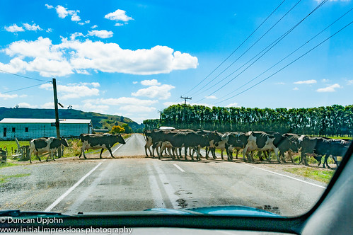 Traffic jam - New Zealand style