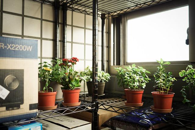阿年農場 | 我的家, Panasonic DMC-GM1S, Olympus M.Zuiko Digital 17mm F1.8