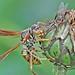041 friggen bugs by starc283