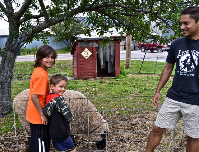 allenholm farm, vermont - petting zoo