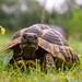 Schildkröte by jeskemarkus