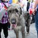 Wolfhound!