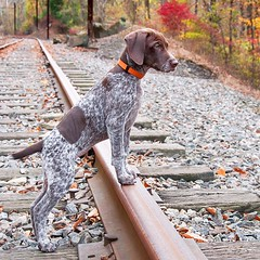 #TBT to the days when a train track was nearly as tall as Piper!