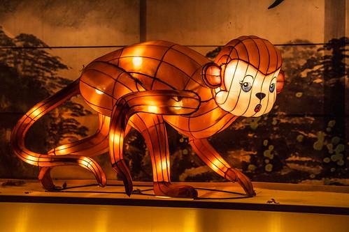 09/12/2016 Chinese kunstenaars verlichten Antwerpse Zoo
