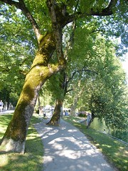 Bled, tóparti sétány