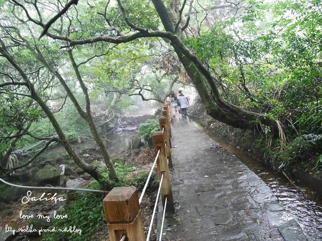 陽明山水車寮步道繡球花 (5)