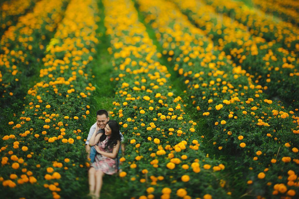 4. Marigold Fields-by-gusdephotography-2
