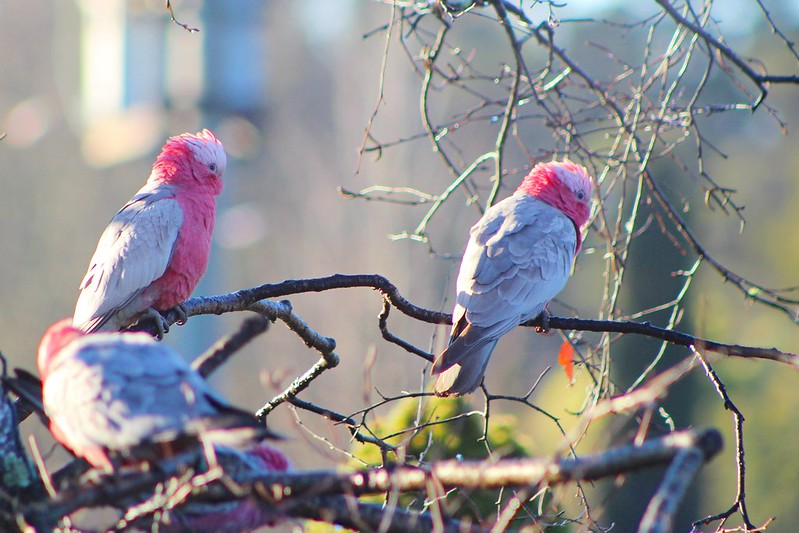 Mittagong Birds