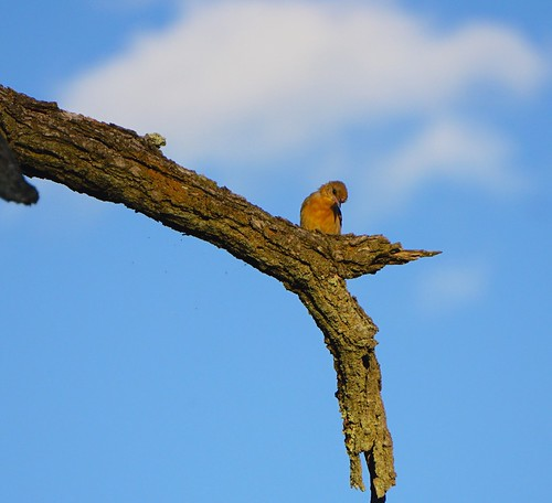 A little birdie 2