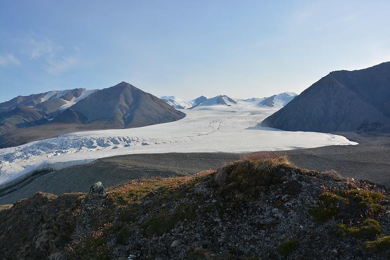 Arctic glacier fly