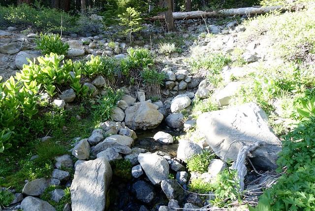Delicious Asa Lake spring