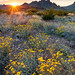 Desert Spring Sunset by Wilderness Photographer