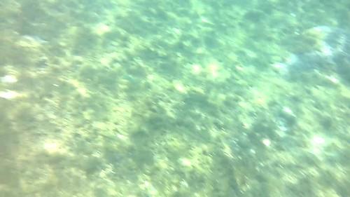 Tortuga y pescado en el fondo del mar en la isla de APO