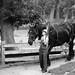 Work Horse, Kline Creek Farm. 3 (EOS) by Mega-Magpie
