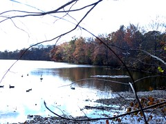 Wantagh - Twin Lakes Preserve - Autumn (88)