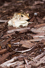 Frogs @ Founders Inn_0005_sig