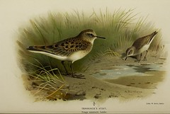 finch(0.0), brambling(0.0), lark(0.0), animal(1.0), sparrow(1.0), fauna(1.0), calidrid(1.0), sandpiper(1.0), beak(1.0), bird(1.0), wildlife(1.0),