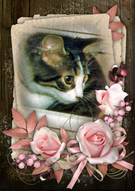 Baby Mitzi Exploring Photo And Pink Flowers