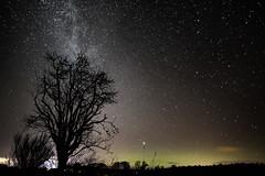 Aurora, Tree and a Sky Full of Stars