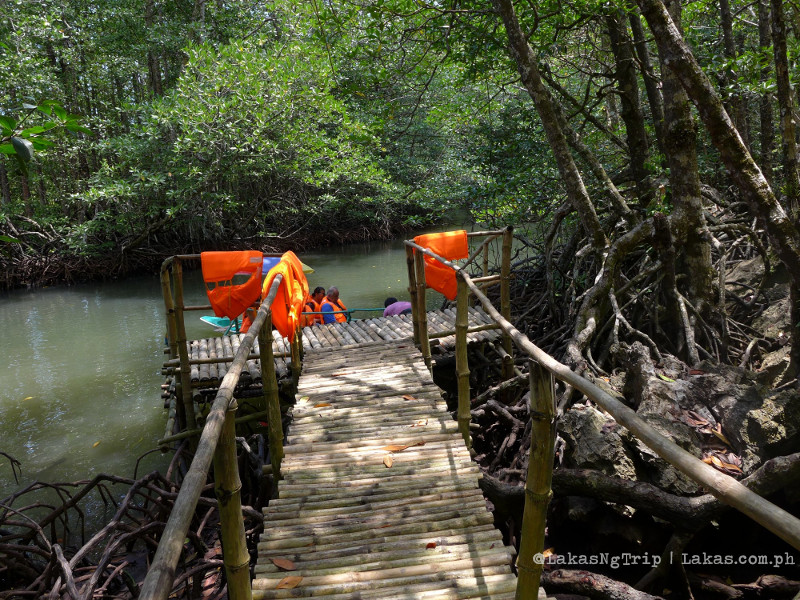 Mangrove Paddle Boat Tour in Sabang, Puerto Princesa City, Palawan
