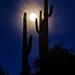 I can hear the coyotes howling, Arizona 2014