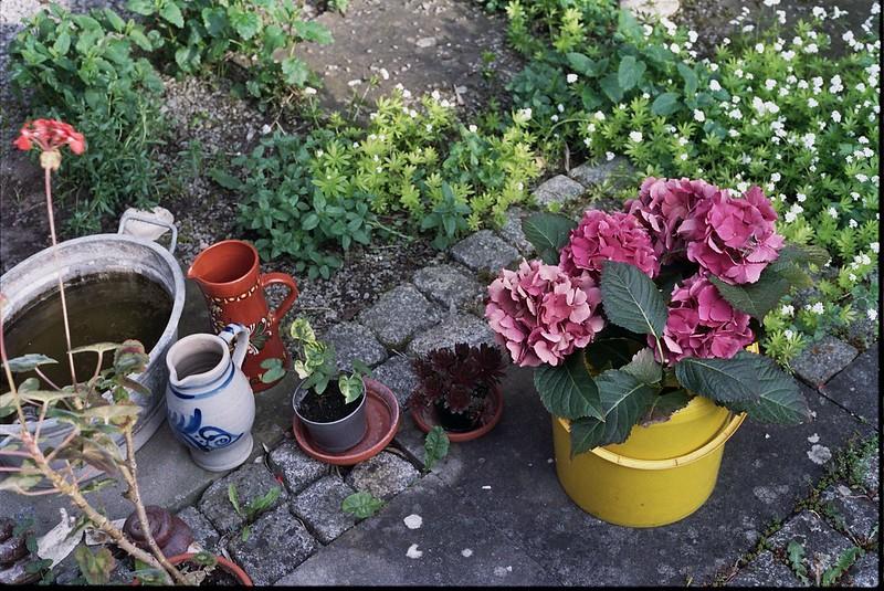 My aunties garden / schorlemaedchen