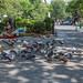 New York City Nature Scene - Washington Square Park by Jesse M Lynch