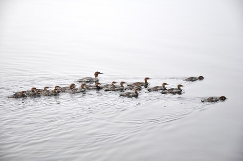 A big family of water birds