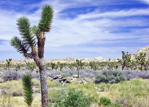 Desert Sky, Joshua Tree NP 4-13
