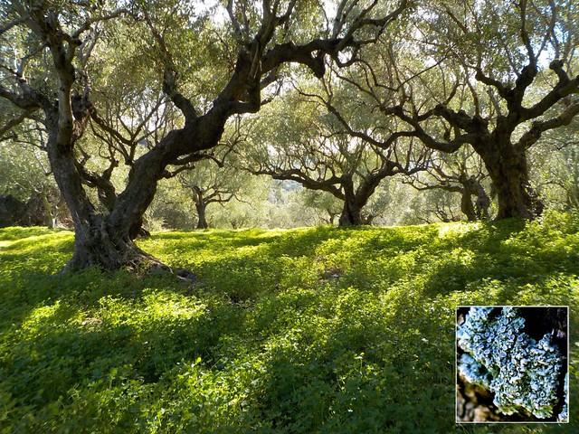 3 Fruiting lichen, Nikon COOLPIX S33