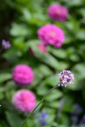 FilipWolak-LSBID-Gardens-8335