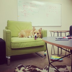 This guy is right at home in the new office—and tired from all the running! #tmculture
