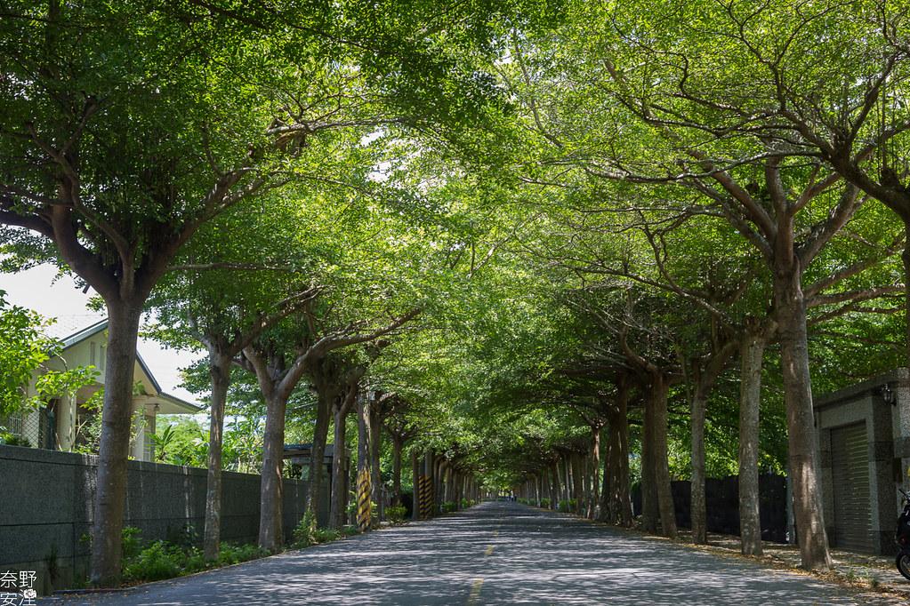 潮洲泗林綠色隧道 (4)