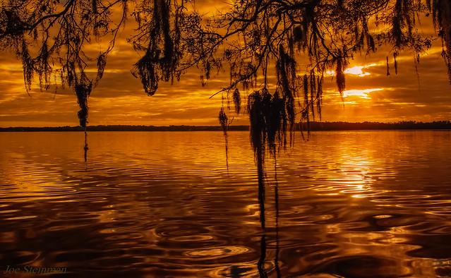 Spanish Moss Rejoicing the Sunrise