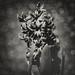 botaniglass (001) by Agata D Prawdzik