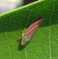 moth(0.0), flower(0.0), plant stem(0.0), animal(1.0), leaf(1.0), leafhopper(1.0), invertebrate(1.0), insect(1.0), macro photography(1.0), green(1.0), fauna(1.0), close-up(1.0), true bugs(1.0),