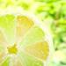 Lemon, Lime or Limon? HSS :) - 9th on Explore by aapfarrington