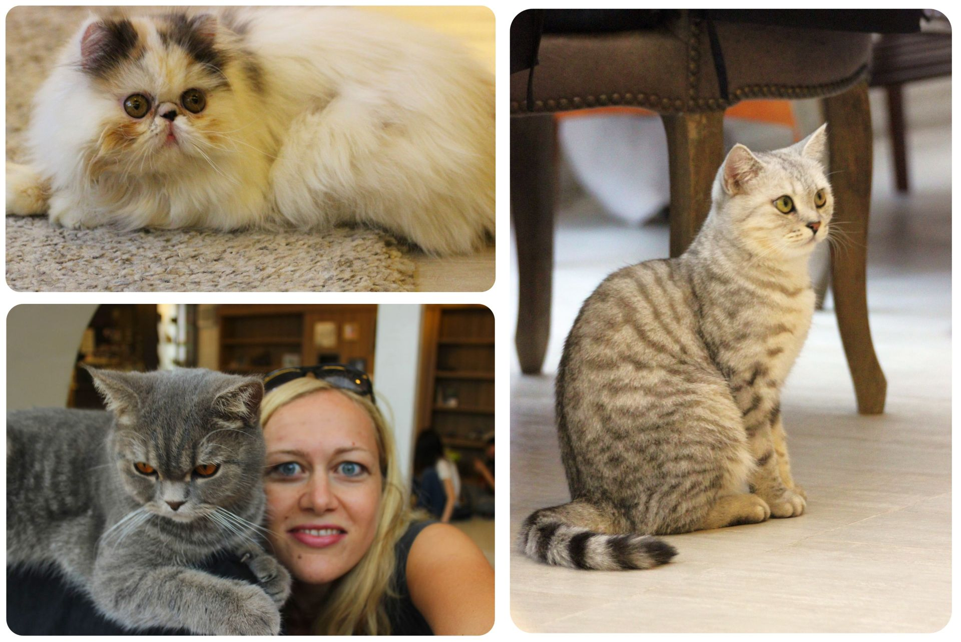 Cats at Purr Cat Cafe Bangkok