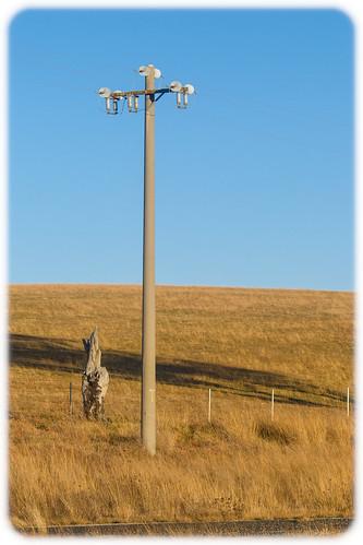 Power pole along Castlereagh highway