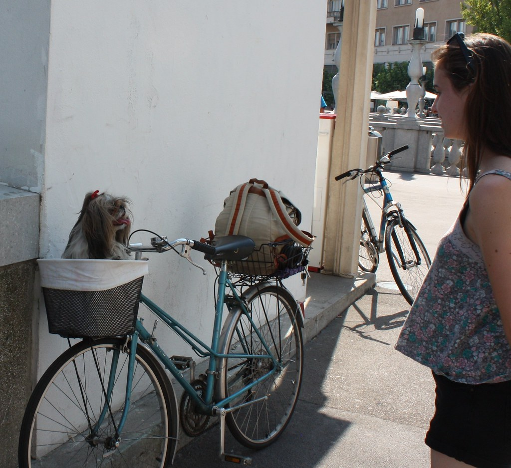 Dog saying hi to hot dog in bike basket Ljubljana Slovenia