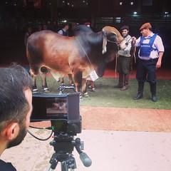 Hoy continuamos con el rodaje del documental #CarnePropia de @romerodh en #LaRural