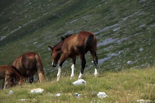 Campo Imperatore: cavalli in libertà