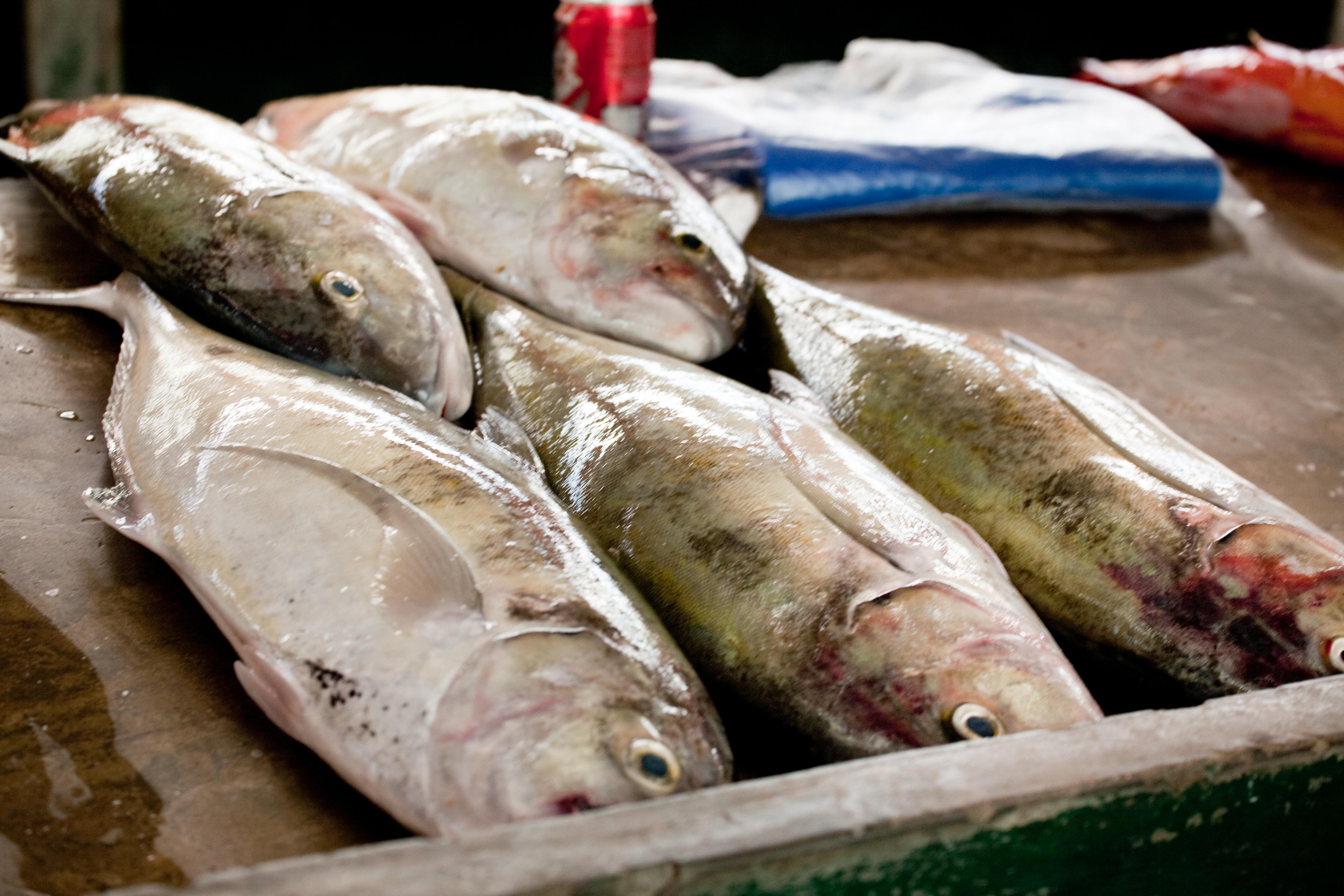 Fish market grid arendal for Lawrence fish market menu