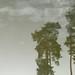 "Pines on ice by Jerzy Durczak (a.k.a."" jurek d."")"