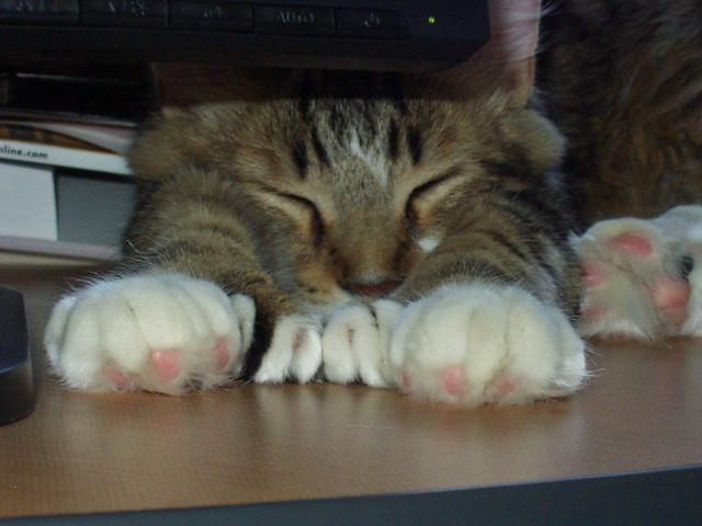 max toes