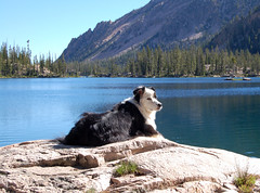 Domino at Imogene Lake, Sawtooth Mts.
