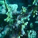 Coral, North Horn, Coral Sea Great Barrier Reef, Australia_11.jpg