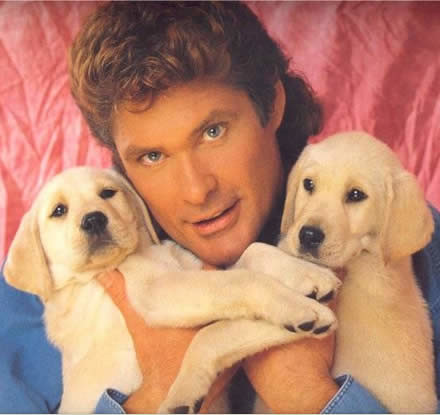 hasselhoff with puppies