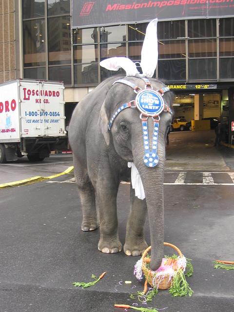 new york u0026 39 s traditional easter elephant