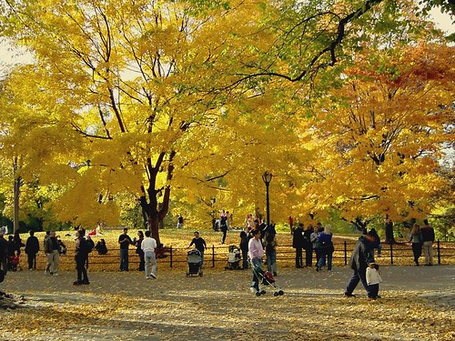 Central Park In Fall Colors